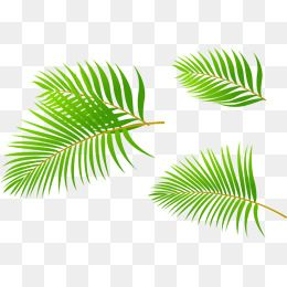 Palm Leaves Leaf Green Coconut Leaves Png Transparent Clipart Image And Psd File For Free Download Coconut Leaves Leaves Leaf Clipart