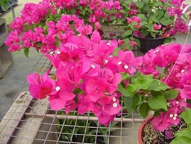 29 Gambar Bunga Untuk Hiasan Kertas 35 Hiasan Bunga Plastik Dinding Ide Terbaru Cara Menghias Kamar Tidur Terutama Untuk Hias Di 2020 Bunga Bunga Kertas Bunga Tulip