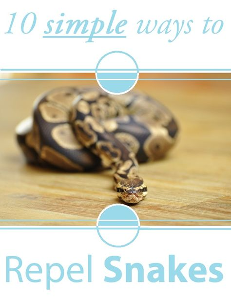 Do you have a snake problem? Or does somebody you know do?   FACT #1: Snakes can be dangerous if you have pets or children.   FACT #2: Most snake repellents are very harmful for people, and they don't even work.  For a dead easy guide to getting rid of snakes, visit Repellent Zone and read their entire article at: http://www.repellentzone.com/natural-snake-repellent-and-homemade-tips/  Keep snakes away permanently!