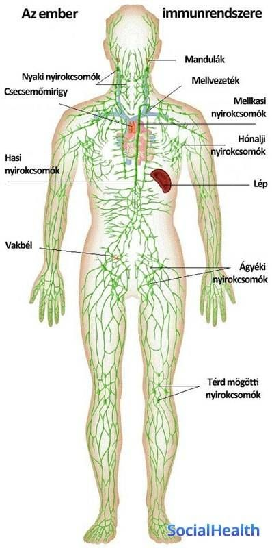 Az alternatív gyógymódok mindig is érdekeltek. Imádom a tudásomat ebben is  meg mindenben bővíteni. in 2020 | Lymphatic system, Lymphatic massage,  Lymph system