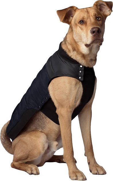 Buy Canada Pooch Summit Stretch Dog Vest Navy 10 At Chewy Com