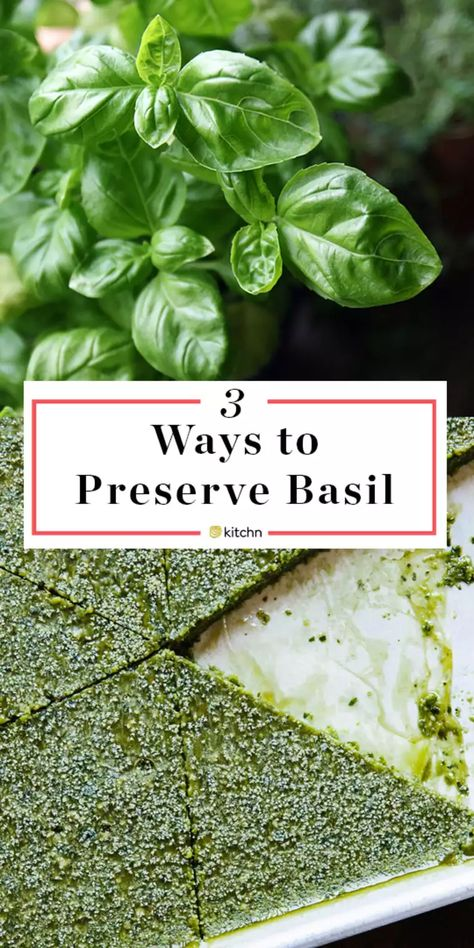 3 Tips for Preserving Fresh Basil All Year Long : Prep: Remove the basil leaves from the stem, then wash and dry completely. Dry: Set your oven to the lowest temperature. Place the basil leaves on a parchment-lined baking sheet, then place it on th Fresh Basil Recipes, Herb Recipes, Canning Recipes, Canning Tips, Vegan Recipes, Preserve Fresh Herbs, How To Preserve Basil, Preserving Basil, Do It Yourself Food