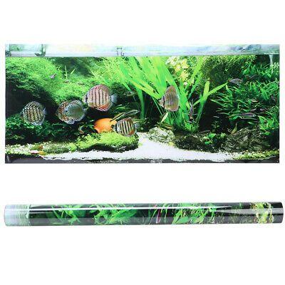 8 07 Fish Water Plants Aquarium Print Background Poster Picture