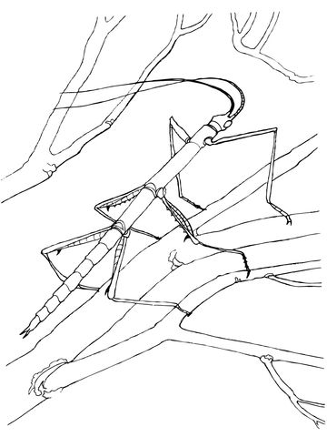 Walking Stick Bug Coloring Page From Walkingstick Category Select From 29189 Printable Crafts Of Ca Insect Coloring Pages Bug Coloring Pages Walking Stick Bug