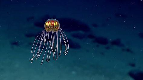 Wetenschappers gebruiken een onderwaterrobot om de geheimen van de Marianentrog te ontrafelen. Deze expeditie duurt tot 10 juli en is via een live feed te