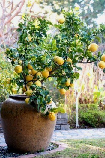 Pin On Garden Mania