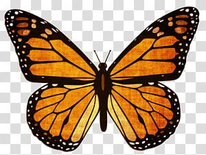 Monarch Butterfly Viceroy Animal Migration Milkweed Butterfly Butterfly Transparent Background Pn Monarch Butterflies Art Butterfly Clip Art Monarch Butterfly