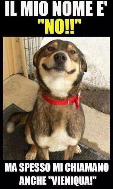 VIGNETTE CANI BUFFI | Settemuse.it nel 2020 | Foto di cani divertenti,  Umorismo divertente sugli animali, Citazioni su animali divertenti