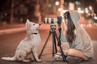 10 Best Dog Sweet Images For Whatsapp Profile Dog Images For Whatsapp Dp Miniature Puppies Pets Best Dogs