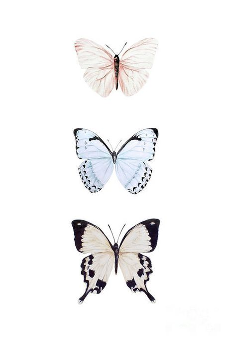 Butterfly Wallpaper Iphone, Iphone Background Wallpaper, Aesthetic Iphone Wallpaper, Watercolor Pictures, Watercolor Art, Cute Wallpaper Backgrounds, Cute Wallpapers, Interesting Wallpapers, Butterfly Painting