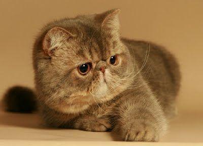 แมว ค นหาด วย Google แมว
