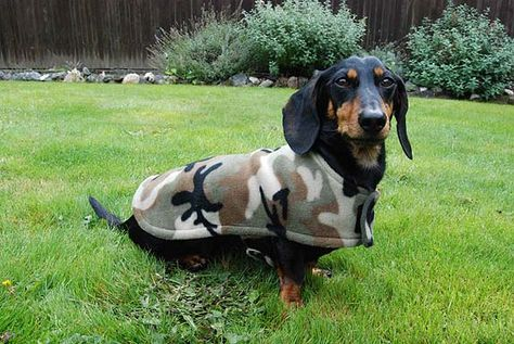 The Cozy Hound Fleece Dachshund Jacket Review Dachshund Clothes