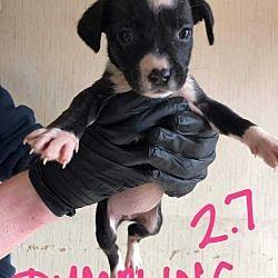 Whitestone Ny Mixed Breed Medium Meet Dumpling P A Pet For