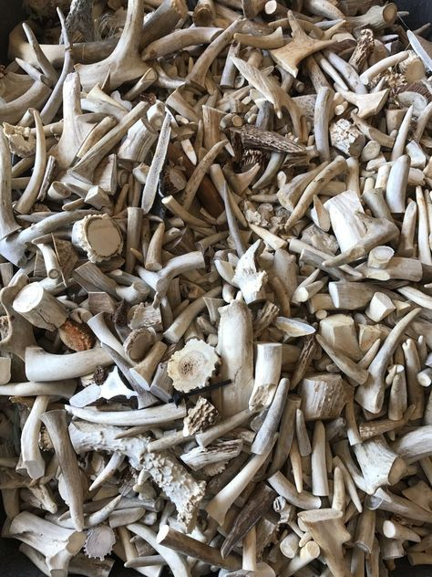 DEER ANTLER PIECES 5 POUNDS chunks TAXIDERMY  CRAFT  CHEWS NATURAL WHITETAIL