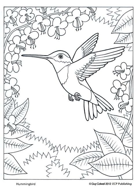 humming bird coloring pages | glass painting | Pinterest | Humming ...