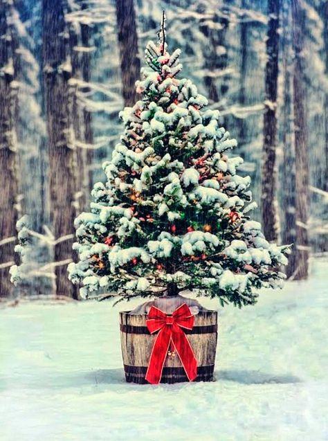 Weihnachtsbaum Im Topf Richtig Pflegen Und Noch Viele Jahre Bewundern Wohnideen Und Dekoration Weihnachtsbaum Weihnachtsdekoration Dekoration