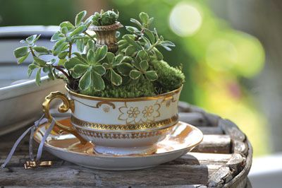 Made from vintage Poole Pottery Compact Choisya tea cup and saucer. Lovely ceramic indoor or outdoor tea cup hanging basketplanter