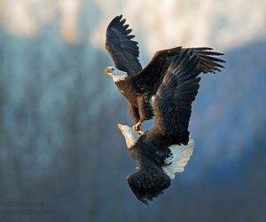تفسير النسر في المنام رؤيا نسر في الحلم Animals Images Wild Animals Photography Eagle Animals