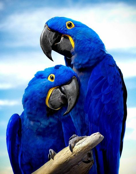 wunderbares Fotos von zwei Papageien                              …