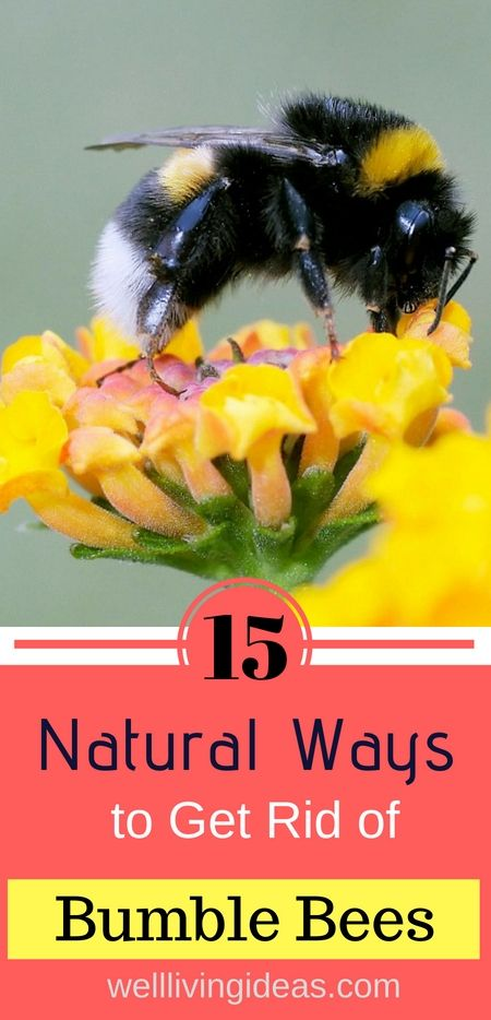 15 Natural Ways To Get Rid Of Bumble Bees Bumble Bee Bee Bee Hive Plans