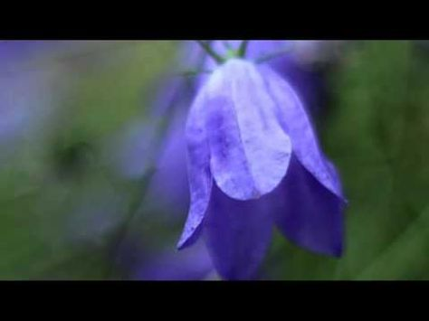 Abraham Hicks - Do this for a week and see what happens - YouTube
