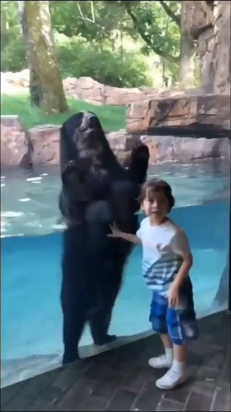 We did it! - funny animals    #animals #funny