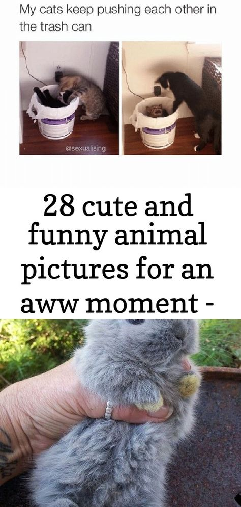 28 Cute and Funny Animal Pictures for an Aww Moment   #funnyanimals #funnydogs #funnycats #funnypictures #funnypics grey furry bunny being held by a persons hand Mountain goat near Garden Wall trail by Jeremiah Thompson, via Flickr; Glacier National Park, Montana lifestyle pet photography, #puppy #SiberianHusky #Husky ©️️️️Nunn Other Photography