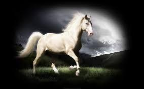 At Sekilleri Yukle Ile Ilgili Gorsel Sonucu Horses Horse Wallpaper Albino Horse