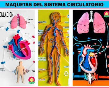 Maqueta Del Sistema Digestivo Diy Manualidades Mamaflor Sistema Circulatorio Sistema Digestivo Para Niños Maqueta Cuerpo Humano