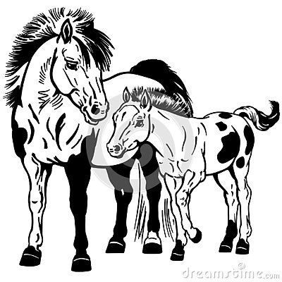 Shetland Pony Horses Miniature Spotted Mare With Little Foal Black And White Isolated Vector Illustration Shetland Pony Pony Drawing Foals