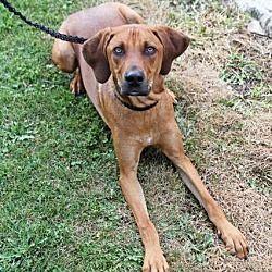 Pet Card Shepherd Dog Mix Joliet Illinois Coonhound