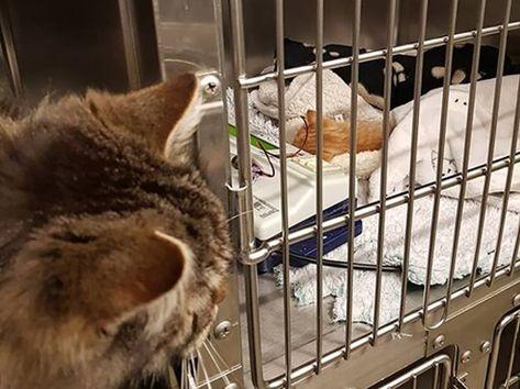 Pin On Heartwarming Animal Stories