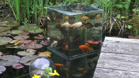 Aquarium Teich