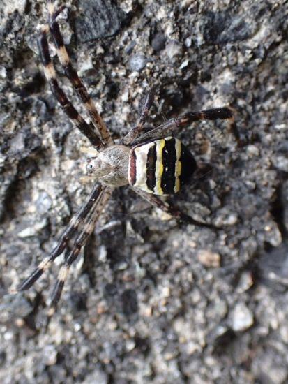 蜘蛛たち 小さな生き物 生き物 ハムシ