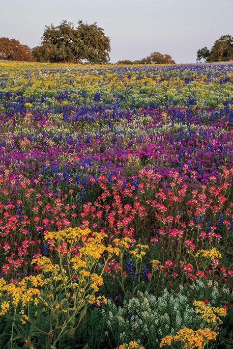 Stories of the Wild(flowers) | Texas Highways