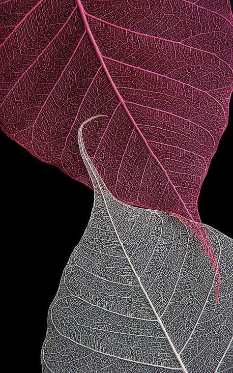Yin Yang Photograph - Yin-yang by Maggie Terlecki
