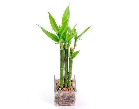 550 Ideas De Jardines Y Plantas En 2021 Plantas Decoracion Plantas Jardines