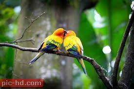 صور العصافير اجمل خلفيات عصافير الكناريا Bird Wallpaper Animals Beautiful Birds
