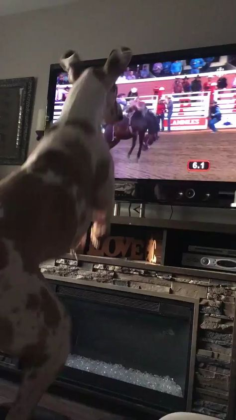 Greyhound pretending to be a bucking bronco * mint ⋆  #fresh #funny #gifs #newgifs