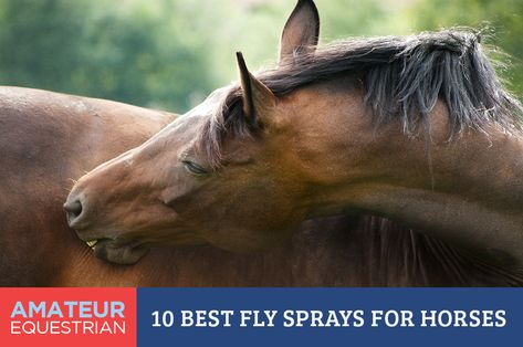 Each Spring Starts The Beginning Of Fly And Insect Control Season