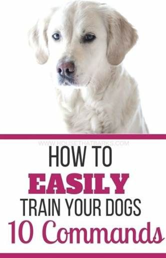 31 Ideas For Dogs Training Protection Dogs Kennel Training A