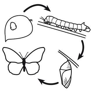 Recursos Y Actividades Para Educacion Infantil Ciclo De La Vida De Una Mariposa Ciclo De Vida De La Mariposa Ciclo De La Mariposa Ciclos De Vida