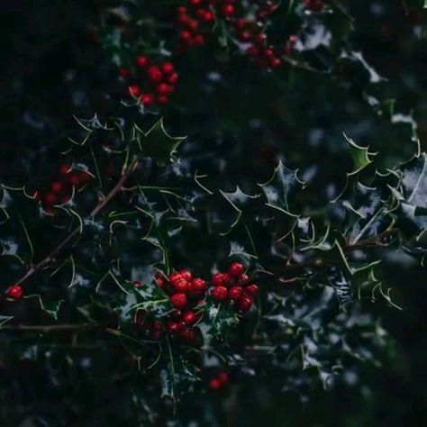 Daily Christmas movie quote!  #hallmark #hallmarkchristmasmovies #christmas #holidays #christmasmovies #homeschoolfamilystuff #homeschool #homeschoolmom #homeschoolfamily #homeschooljourney