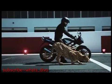Leopart Bike Res Love Whatsapp Status Video