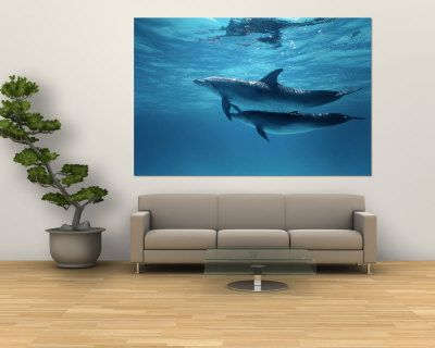 Underwater Dolphins Wall Murals | Pair Of Spotted Dolphins Wall Mural By  Wolcott Henry   At Part 62