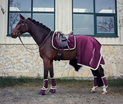isnt this #instapic from @scarlett_equinelife just unreal?! Eskadron Platinum Blackberry Saddlepad Velvet Crystal Allround boots Over reach boots Fauxfur Gorgeous Jersey Stripe rug Pic credit to @eschreinerphotography - Ameline Floquet Canoine