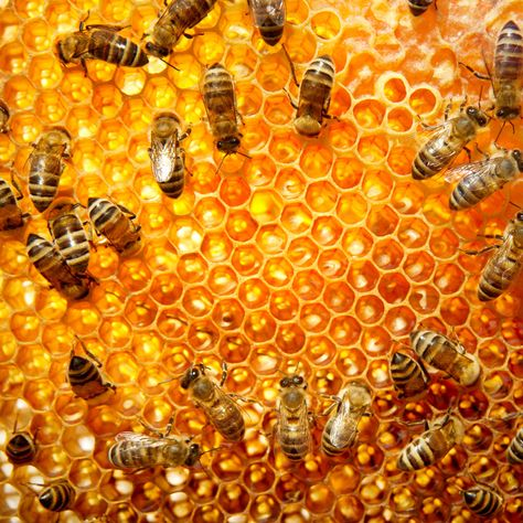 Bee products just look better on a .buzz domain name!