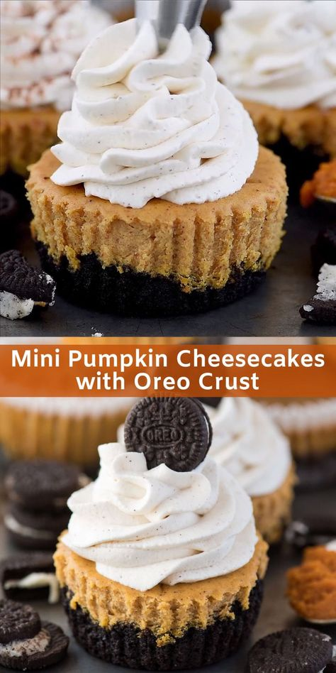 Mini pumpkin cheesecakes made in a muffin pan with an OREO crust! Also includes directions for a graham cracker crust. Easy mini pumpkin cheesecake recipe to make for fall or thanksgiving dessert! Cheesecake is Oreo Crust Cheesecake, Pumpkin Cheesecake Recipes, Pumpkin Recipes, Pumpkin Cheesecake Snickerdoodles, Pumpkin Cheescake, Pumpkin Fudge, Pumpkin Chocolate Chips, Thanksgiving Desserts Easy, Recipes