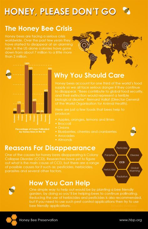 Honey Bees  |Local Healthy Sustainability by I support Farmers Markets