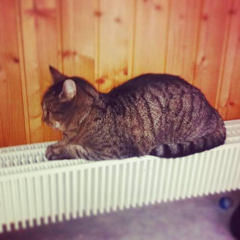 catseyes ...radiator season has arrived...